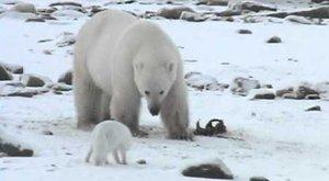 Komu zima neva? Polární zvířata pod nulou