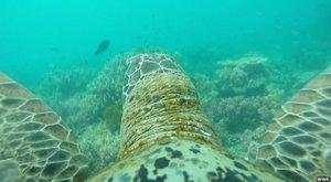 Překvapení: 3D tiskárna zachraňuje korály!