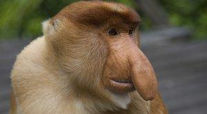 Opičí listožrouti: VŠECKO přijde vhod