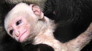 Do korun stromů: Opice z nejvyššího patra!