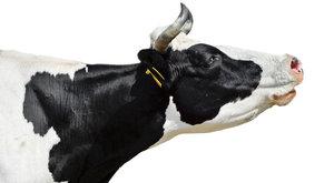 Mléko v akci: Od krávy po jogurt
