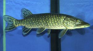 Jdeme na ryby: Seriál video návodů časopisu ABC