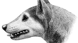 Pes drtič kostí: Chrup, který udělal křup!