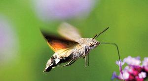Můří vychytávky: Tajemství nočních motýlů