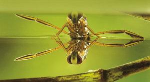 Vystresovaní komáři: Pomůže znakoplavka?