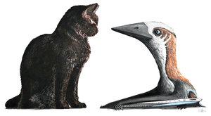 """Mrňavý ptakoještěr nebo pravěká """"kočička""""?"""