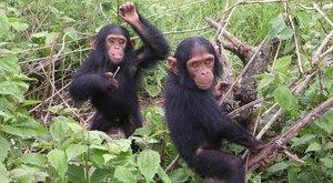 Královna šimpanzů Jane Goodallová navštívila Prahu