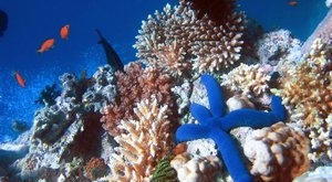 Krása korálových útesů: Postavíme si nové?