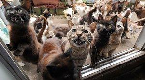 bitva kočky online datování živé datování v Indii