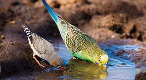 Andulky a gramatika: Větný rozbor pro papoušky