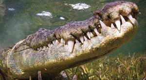 Krokodýlí převlek pro největšího plaza