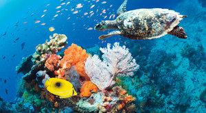 Korálové útesy: Umírající podmořská města