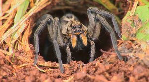 Pavouci: Osminozí krasavci