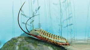 Tajemství trilobitů: První zkamenělá vajíčka