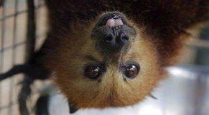 Ostrovní endemit: Domov nevídaných druhů