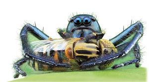 Pavouk superpredátor: Největší lovec ze všech