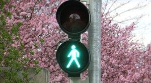 Bezpečně v silničním provozu 4: Světelná křižovatka
