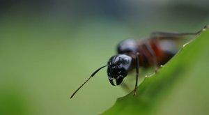 Mravenčí státy ve válce