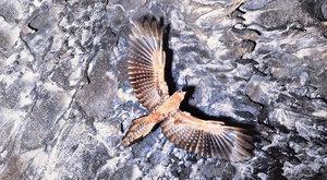 Tajemní Gvačarové: Za jeskynními ptáky