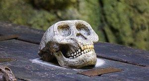 Hororový Červený seznam: Kdo zemře?