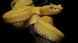 Pět nejnebezpečnějších přírodních krás světa