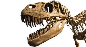 Rychlý chodec: Nový pohled na tyranosaura