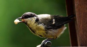 Vaše tvorba: Ptáci na krmítku od Kryštofa