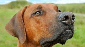 Psi a vlci: Kdo je chytřejší?