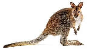 Upíří klokan: Záhada dlouhých špičáků