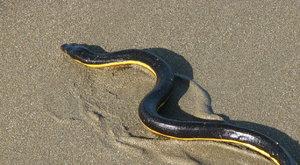 Had se pase! Na dně moře!!