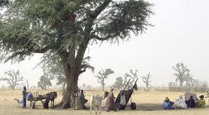 Velká zelená zeď: Porostou na Sahaře lesy?