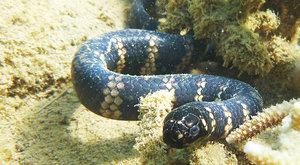 Hadi v černém: Znečištění mění barvu zvířat
