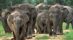 Trpasličí slon: Prcek mezi obry