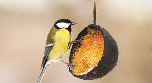 Birdwatching 17: Krmítka