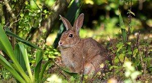 Roztomilá pohroma: Nezničitelný divoký králík