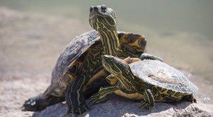 Želvy nad propastí: Seznam ohrožených druhů