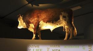 POZVÁNKA Nová expozice v Národním zemědělském muzeu
