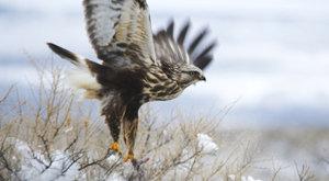 Birdwatching: Kde pozorovat ptáky v zimě
