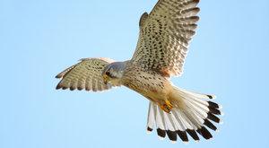 Birdwatching 19: Na ptáky s mobilem