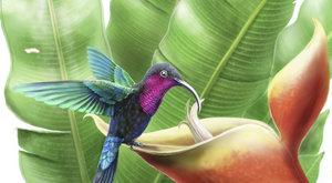 Kolibříci zKaribiku: Ptáci v ohrožení