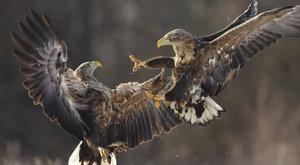 Birdwatching 21: Jak porozumět ptákům