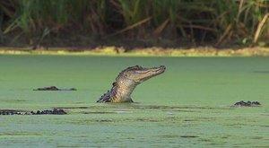 Vlci u moře: Predátoři na neobvyklých místech