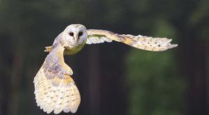 Birdwatching 22: Za sovím houkáním