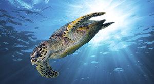 25+: Nejohroženější želvy světa