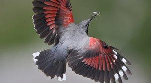 Birdwatching 25: Jak se stát ornitologem