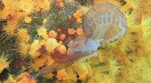 Draví koráli: Pozor koušou!