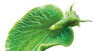 Ukradená zeleň: Plži na sluneční pohon