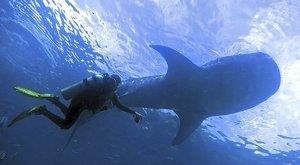 Žralok není ryba: Jak se měří obři
