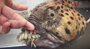 Monstra z hlubin: Nejstrašnější úlovky