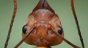 Tito mravenci si zdobí domov hlavami nepřátel
